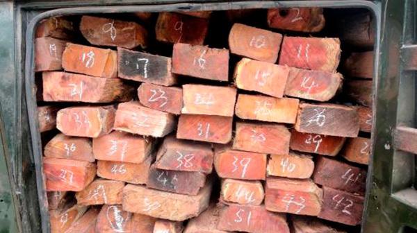 男子非法收运一级珍稀濒危保护植物红豆杉,被刑拘